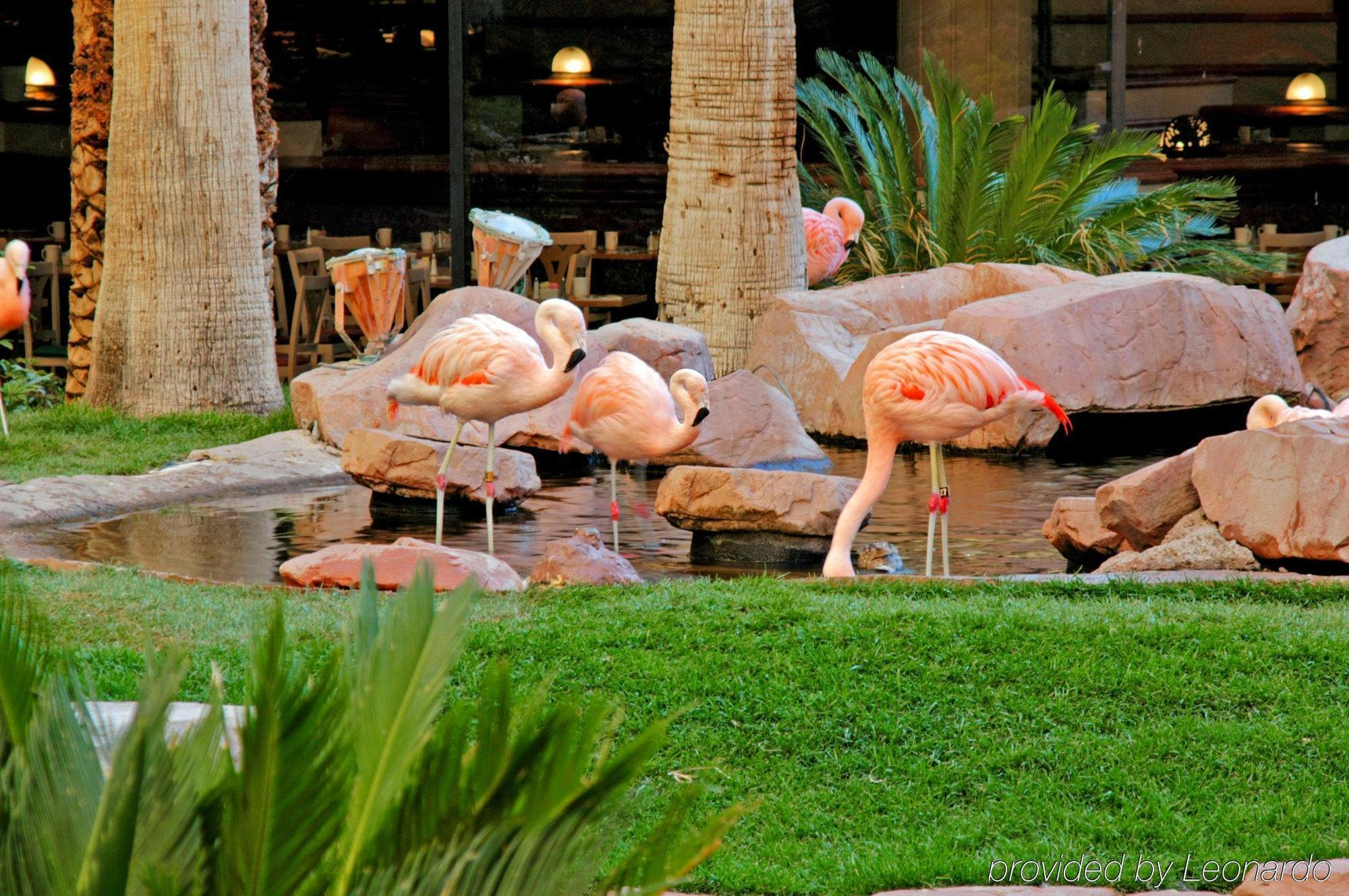Hotel flamingo las vegas las vegas for Yard statues las vegas